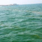 Оповещение о красном приливе в районах ОАЭ в Оманском море