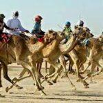 Зрелища, на которые стоит посмотреть в ОАЭ