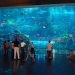 Торговый центр The Dubai Mall