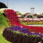 Чудо сад или сад чудес в Дубаи