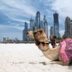 Как вести себя во время отдыха в ОАЭ?