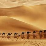 Фауна и флора в ОАЭ