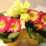 К 8 Марта доставка цветов в Запорожье предлагает красивые букеты